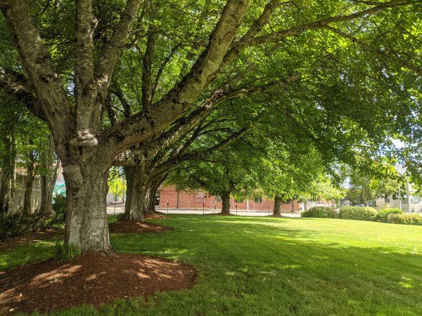 Park at Brenton County Courthouse Corvallis Oregon